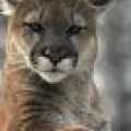 Profile picture of kelum