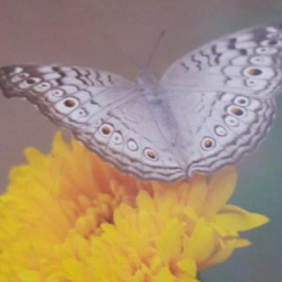 Profile picture of Sidath perera