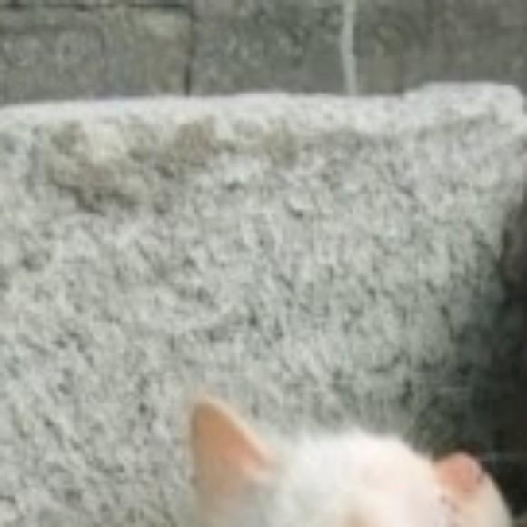 Profile picture of Cme simi