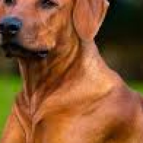 Profile picture of ceylonman