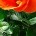 Profile picture of Nimal Jayasinghe