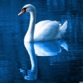 Profile picture of Prasath