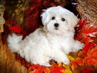 cute-dogs-wallpaper-6329-6604-hd-wallpapers